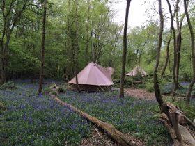 camping near London