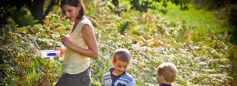 Blackberry picking at our Sussex campsite