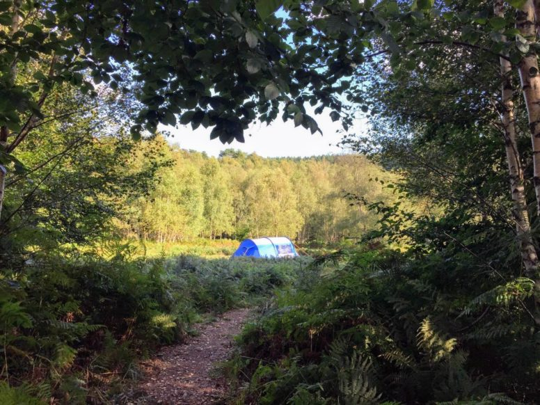 Eco Holidays - forest tent pitches