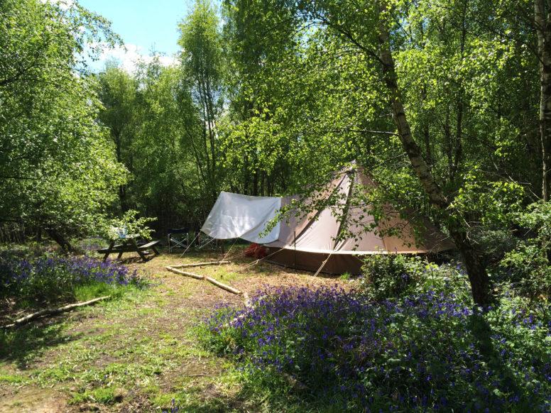 Bell tent in the woods_Beech Estate_Green Parent