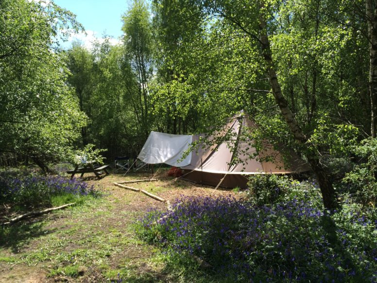 Bell tent glamping in bluebells