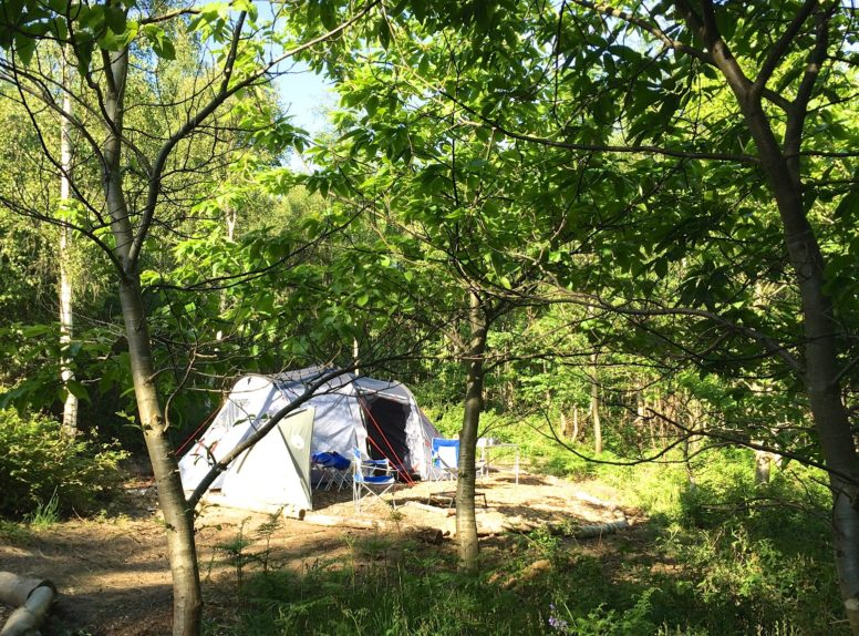 A tent pitched at The Secret Campsite Beech Estate where Hugh has picked up camping tips