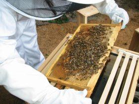 beekepeing