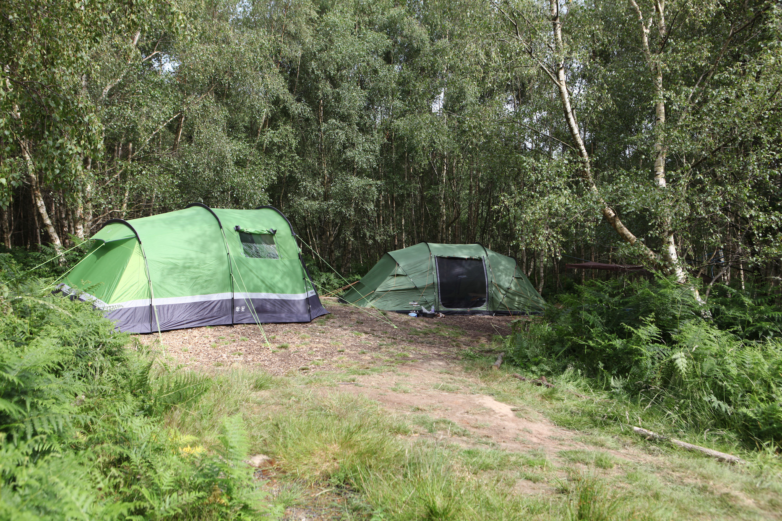 Forest camping in East Sussex
