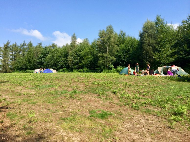 Woodland group camping meadow at Sussex campsite