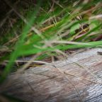 Wildlife at Sussex Campsite