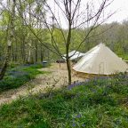 Woodland Glamping in Sussex