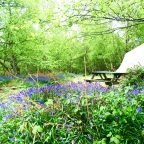 Glamping in the woodland campsite