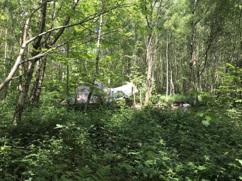 Isolated, secluded bell tent in Sussex campsite