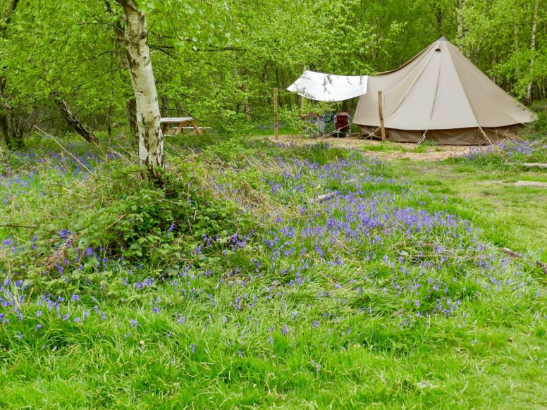 Easter camping - a bell tent in bluebells