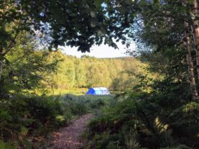 Secluded tent pitch at Beech Estate Campsite