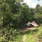 Secluded bell tent in the woods at Beech Estate Campsite