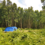 Tent Pitch at Beech Estate Campsite in Sussex