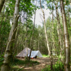 Bell tents in the woods at Beech Estate Campsite in Sussex