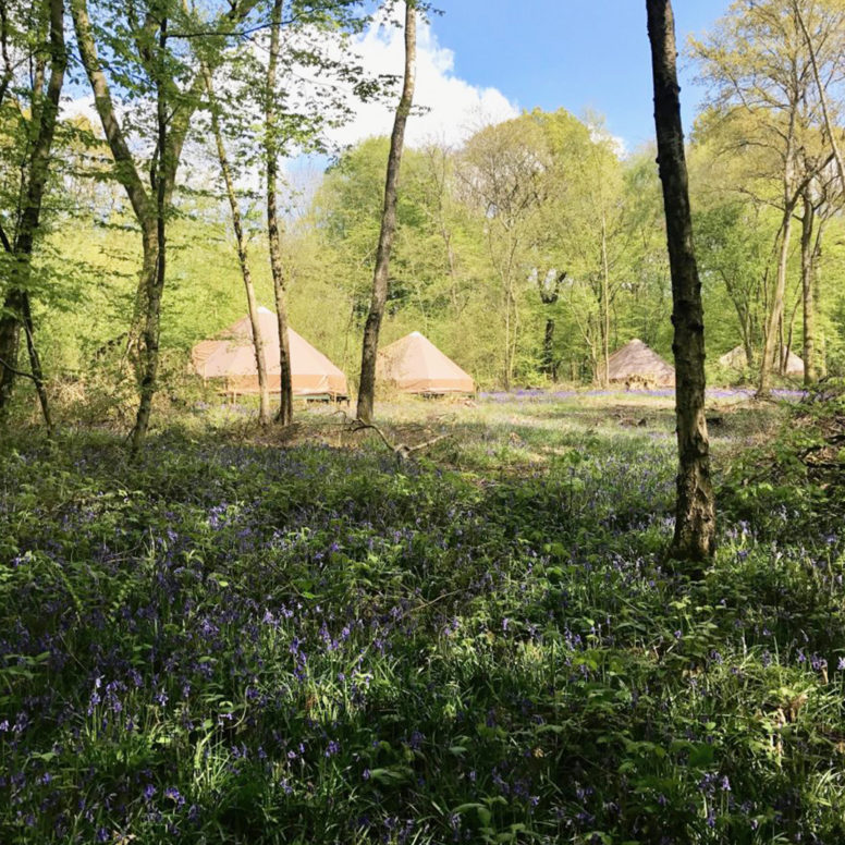 Woodland glamping at Wild Boar Wood campsite