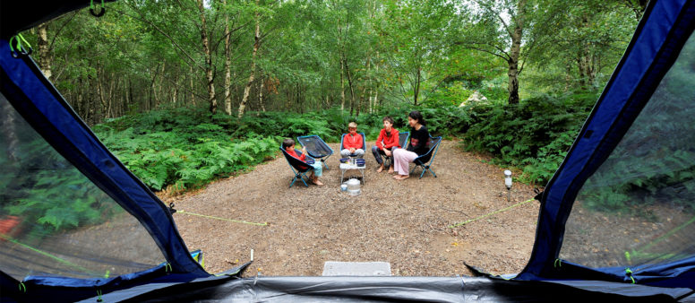 Woodland camping pitch at Beech Estate Campsite