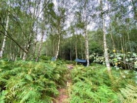 Hammock Camping in Sussex at Beech Estate Campsite