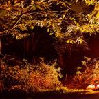 Autumn camping at Beech Estate Campsite in Sussex