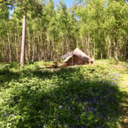 Spring glamping in bell tents at Beech Estate Campsite