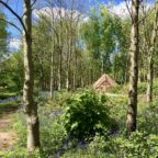 Bell tent in the woods in Sussex