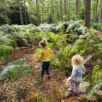 children in the wood at family friendly campsite in Sussex, Beech Estate
