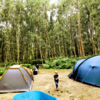 Large pitches for family camping in Sussex at Beech Estate Campsite