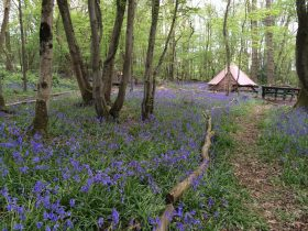 Bell tents in sussex