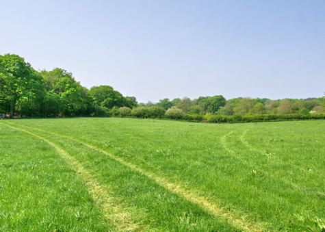The Sussex Woodland Campsite in spring 2