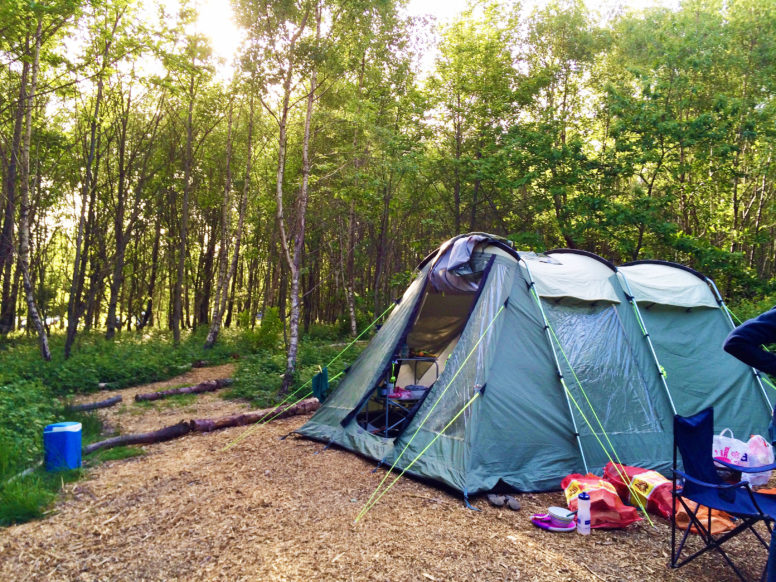 Camping in the woods at Beech Estate Campsite