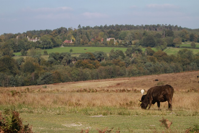 Ashdown Forest. Home of Winnie-the-Pooh. Near two Secret Campsites.