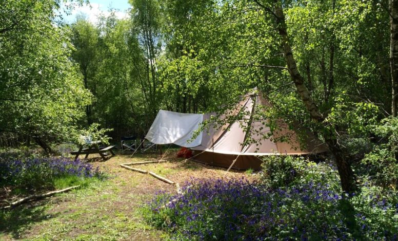 Bell tent glamping at Wild Boar Wood and Beech Estate Campsites