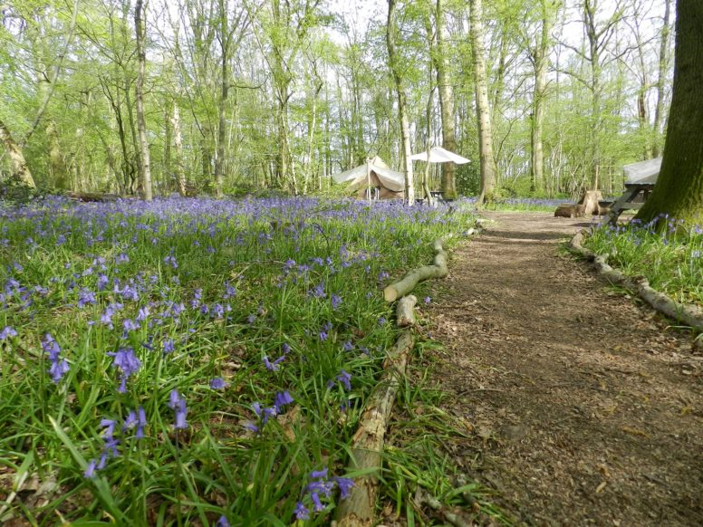 A bell tent among the bluebells at Wild Boar Wood on a spring glamping trip