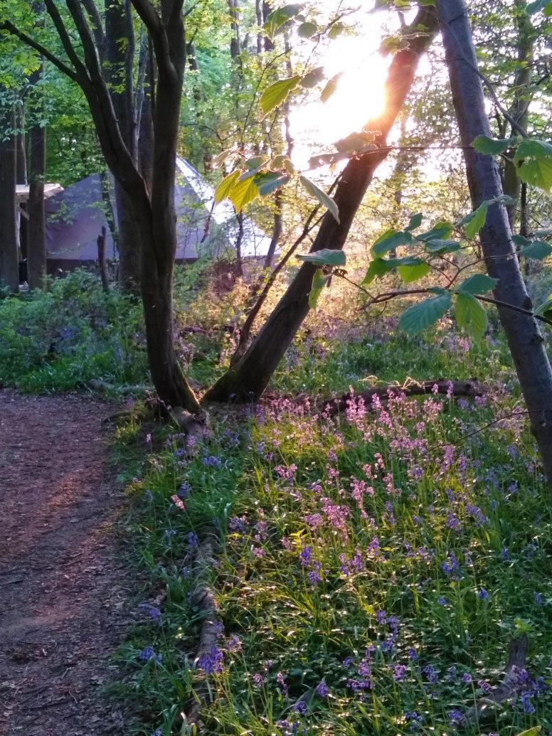 glamping near Brighton, Wild Boar Wood campsite