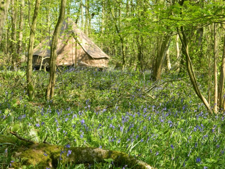 A bell tent at The Secret Campstie Wild Boar Wood - great for bank holiday glamping