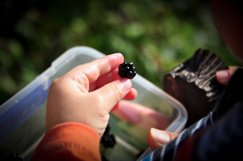 A child's hand holding a blackberry; a scavenger hunt is one of our suggested camping games for kids