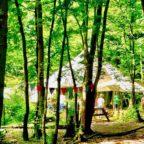 West Sussex campsite