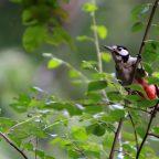 bird watching campsite