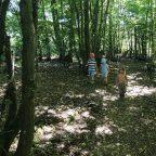 Family campsite in West Sussex