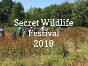 Wildlife festival at the campsite in Sussex