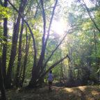 Exploring the woodlands of Wild Boar Woods Campsite