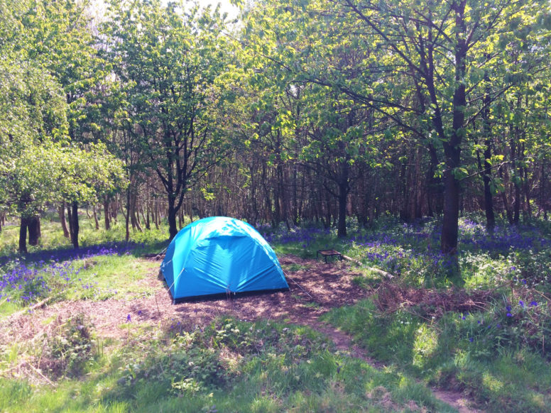 Spring camping at Beech Estate Campsite in Sussex