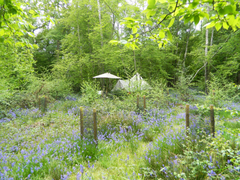 Easter glamping in Sussex at Wild Boar Wood Campsite