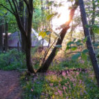 Bell tent at off grid glamping site in Sussex