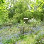 Bell tent in bluebells at glamping site in Sussex