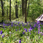 Best campsites near London