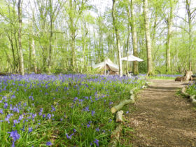 Spring glamping in Sussex at Wild Boar Wood Campsite