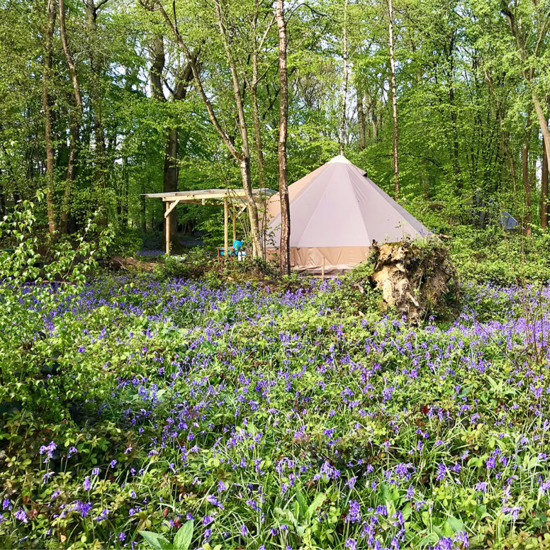 Glamping in spring at Sussex Campsite, Wild Boar Wood