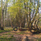 Tyre swing at Sussex glamping site
